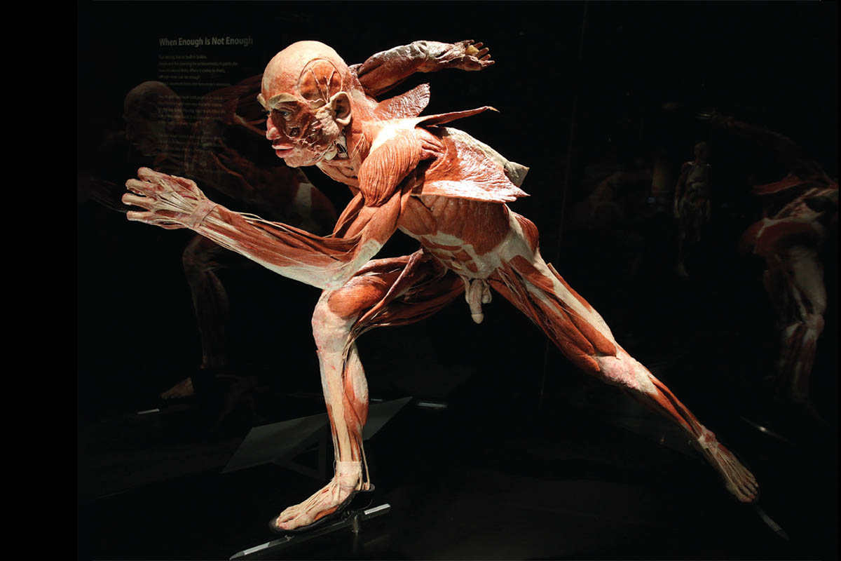 BODY WORLDS Caught between taboo and fascination, Discover germany Magazine